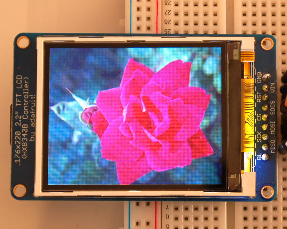 lcds___displays_rose.jpeg