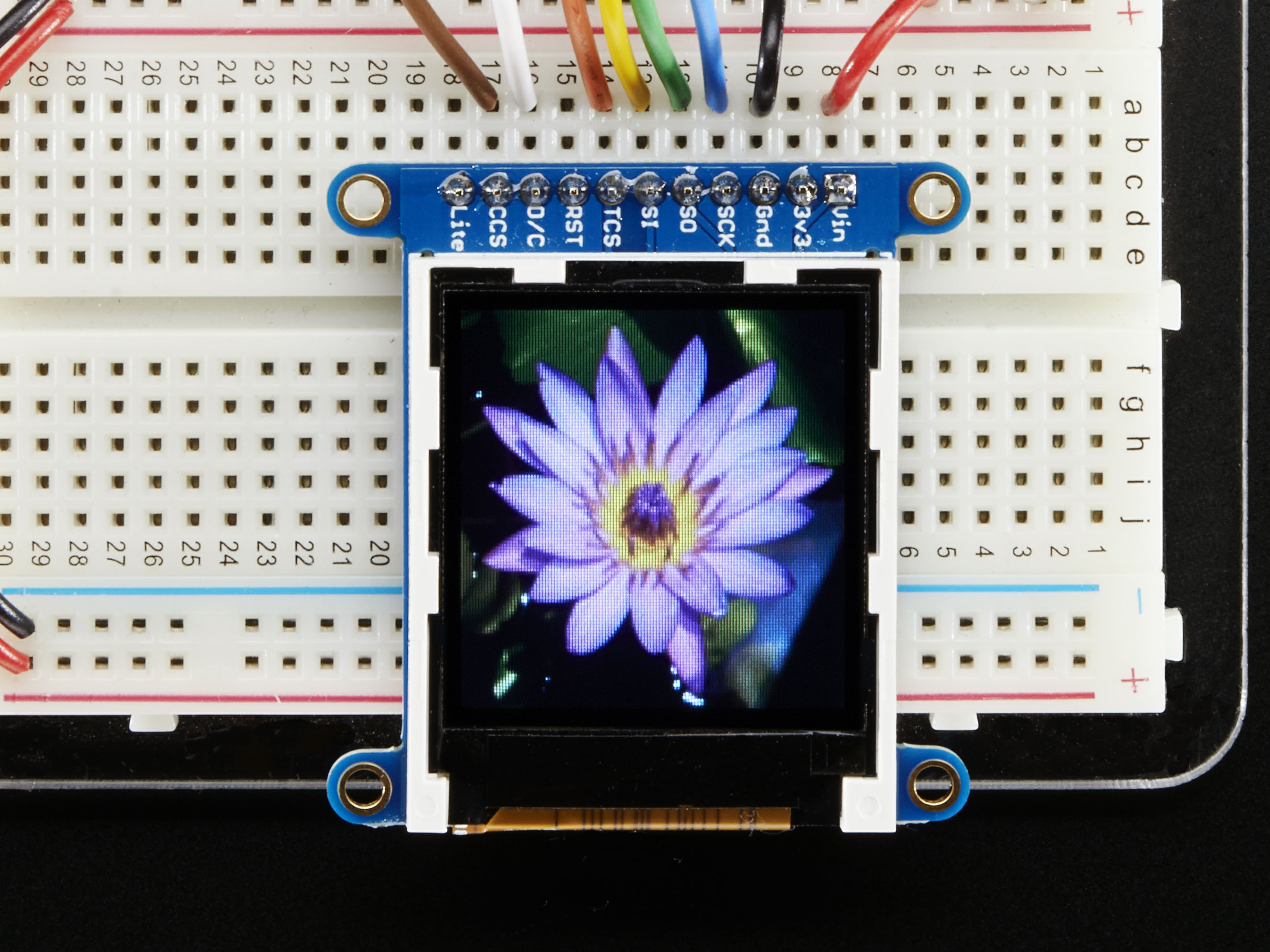 adafruit_products_lily.jpg