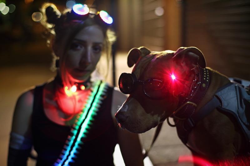 trinket_olive-becky-stern-laser-dog-goggles.jpg