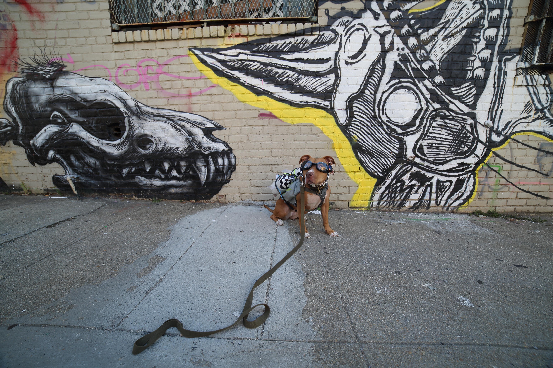 trinket_Olive-laser-dog-goggles.jpg