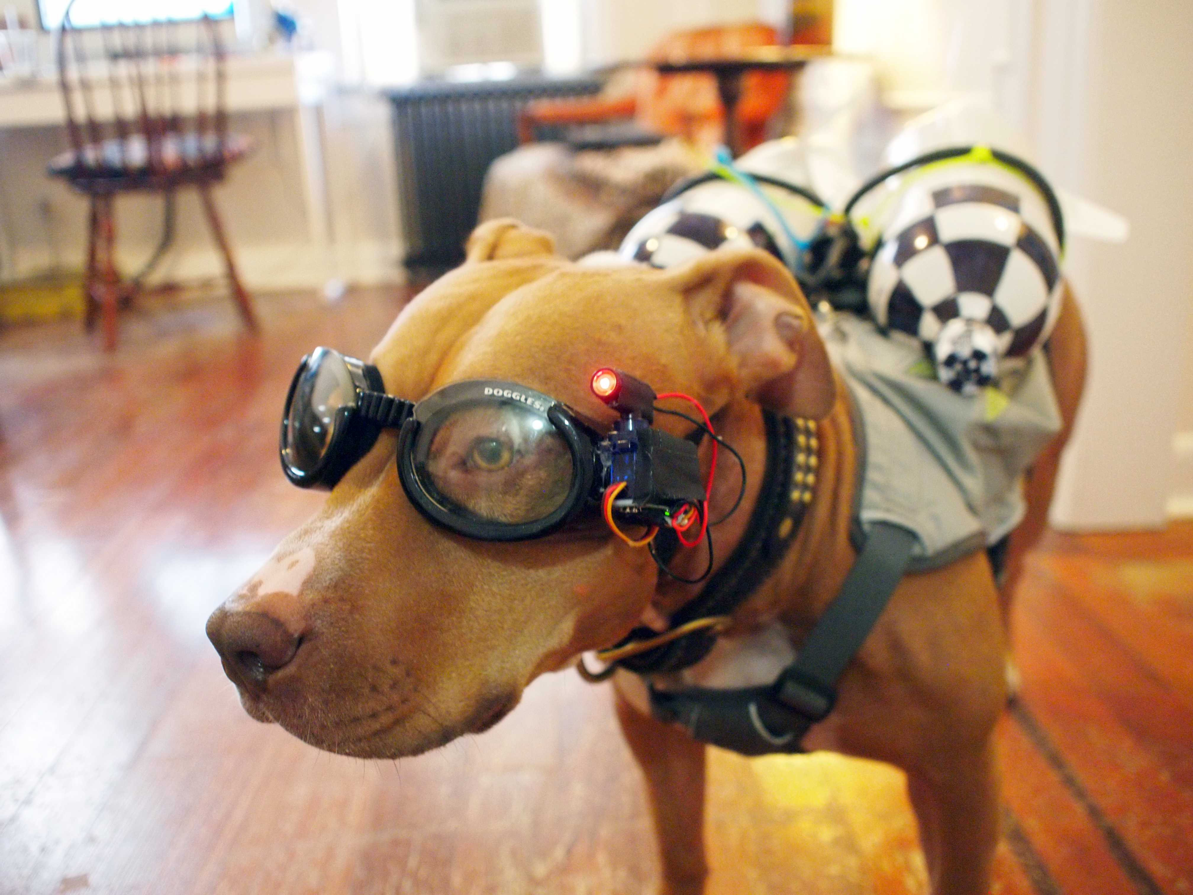 projects_olive-tank-girl-laser-doggles.jpg