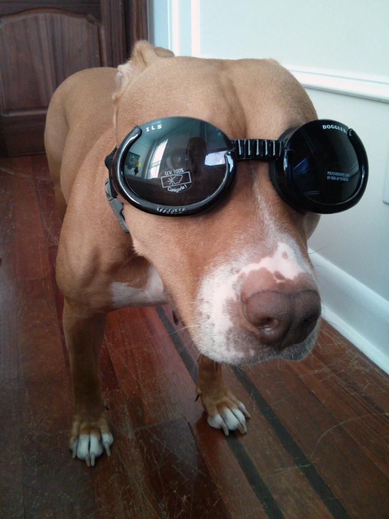trinket_olive-wearing-doggles.jpg