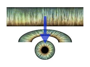 light_convert-iris.jpg