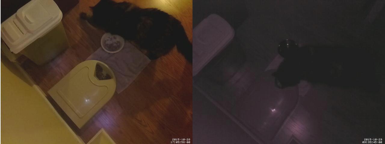 raspberry_pi_cam_pics_cat_food.png