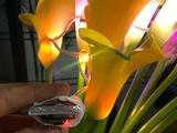proximity_bouquet_4.jpg