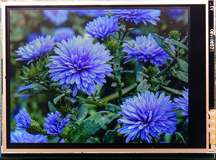 feather_purpleimg.jpg