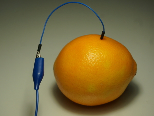 circuit_playground_fruit_no_stem.jpg