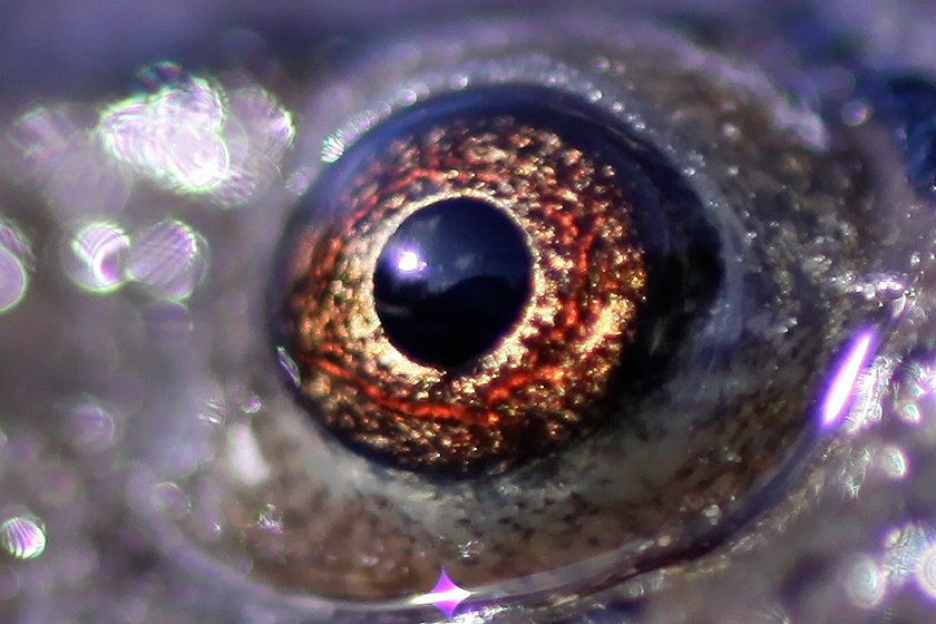 light_Eye-of-a-Newt_6128.jpg