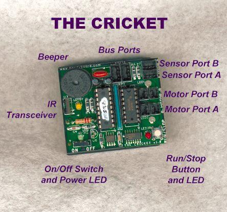 adabox_cricket-ill.jpg