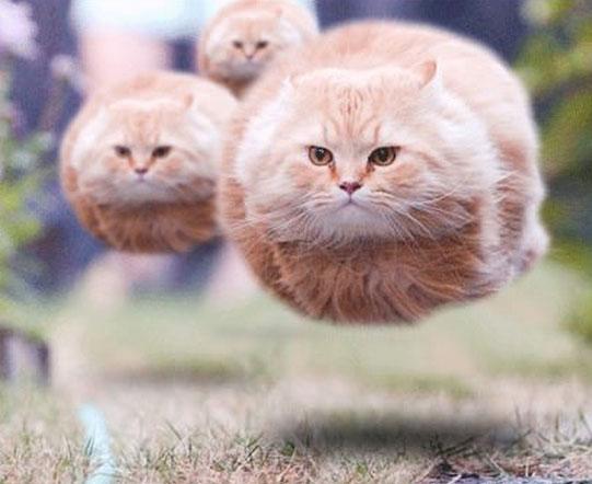 sensors_cat-ufos.jpg