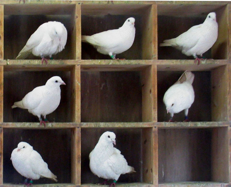 micropython___circuitpython_Pigeons-in-holes.jpg