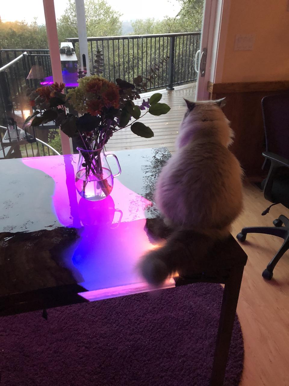 led_strips_table_cat.jpg