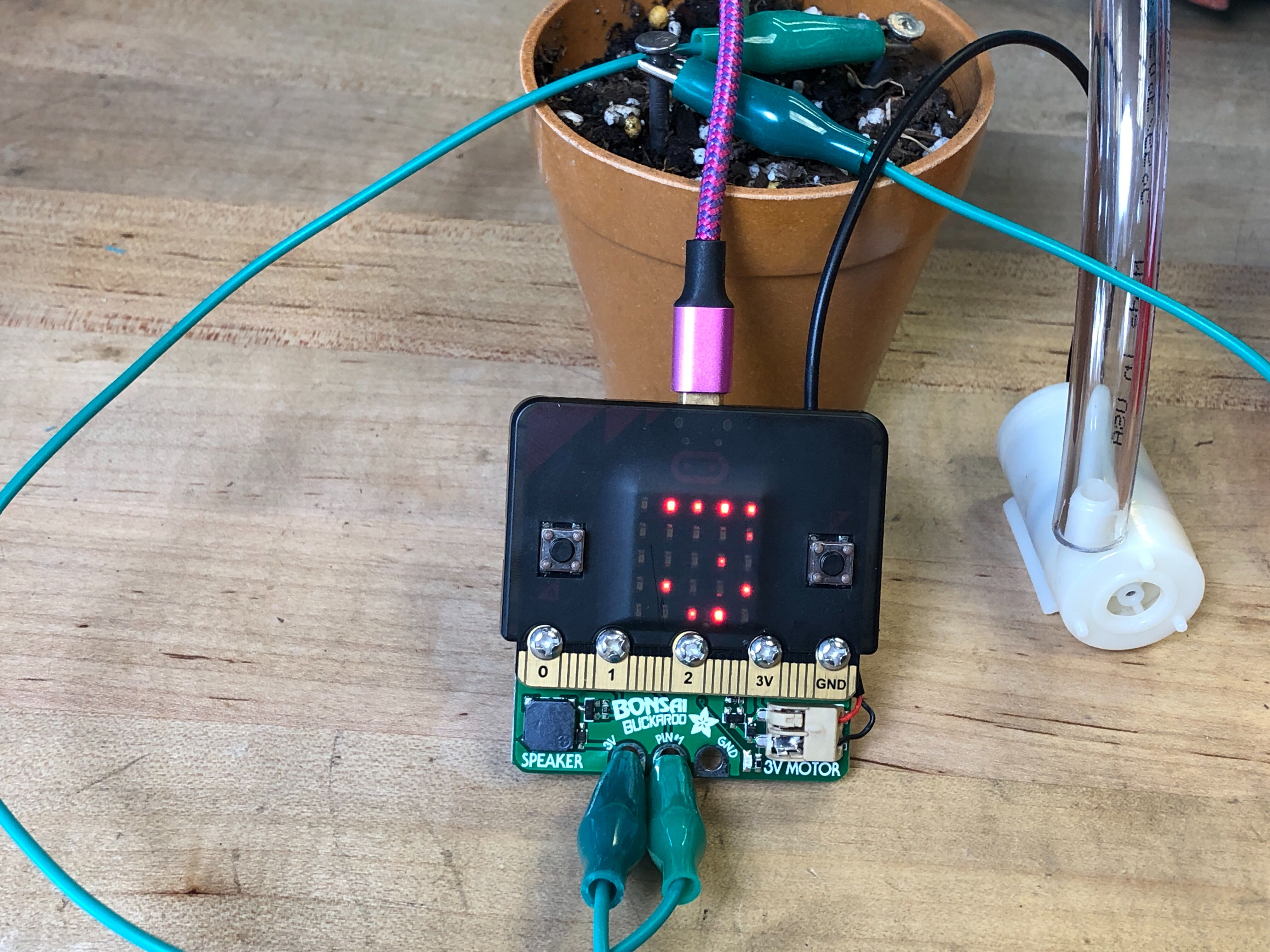 sensors_Bonsai_Buckaroo_micro-bit_soil_level.jpg