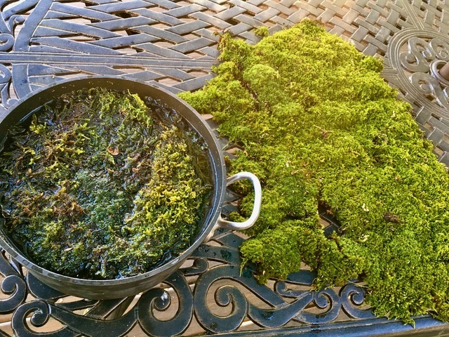 weather_23_moss_preserving.jpeg