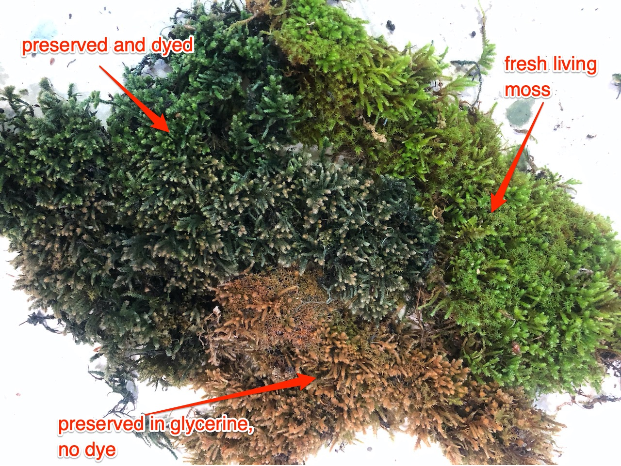 weather_29_moss_dyed.jpg