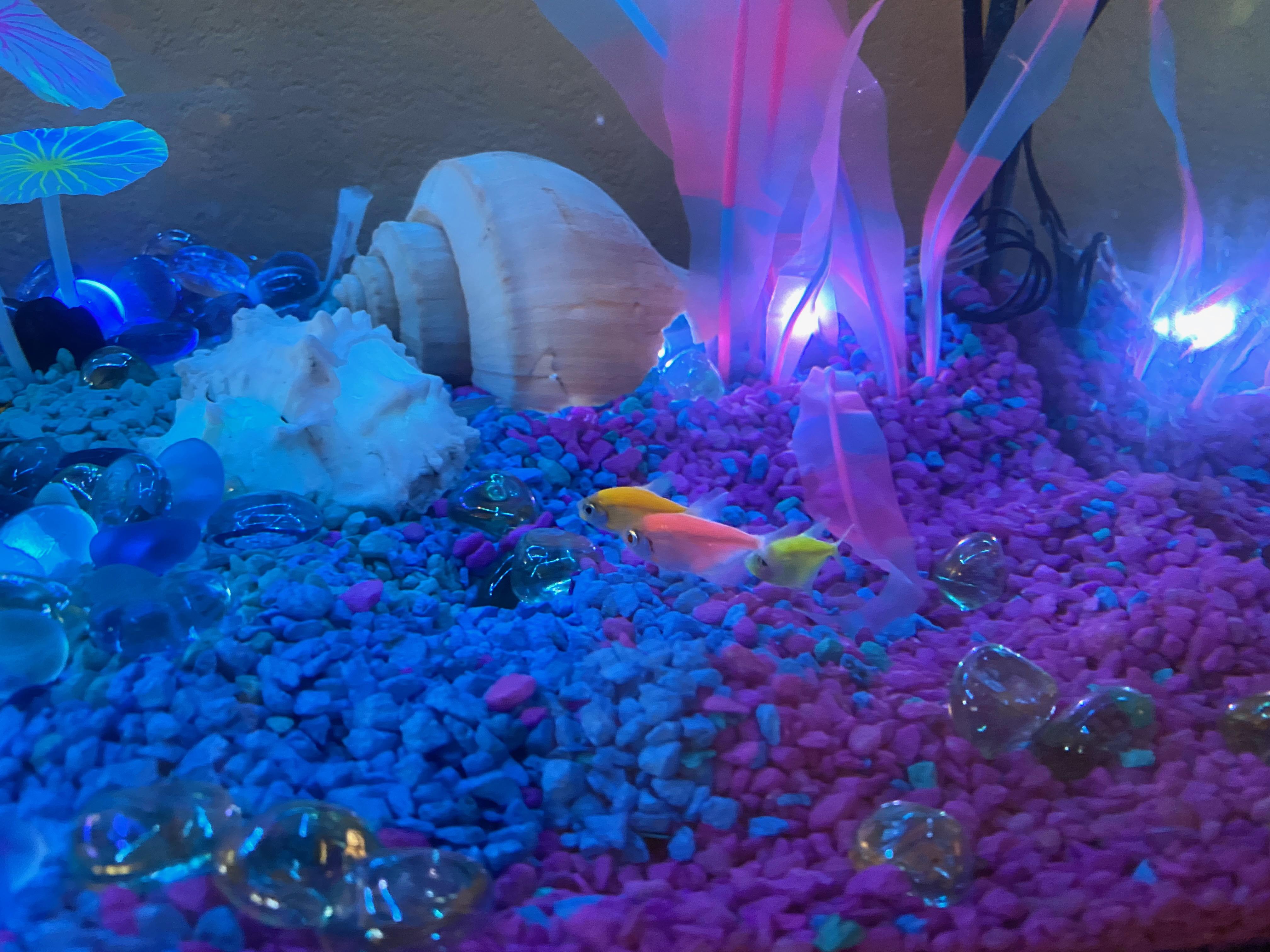 projects_aquarium_fish.jpeg