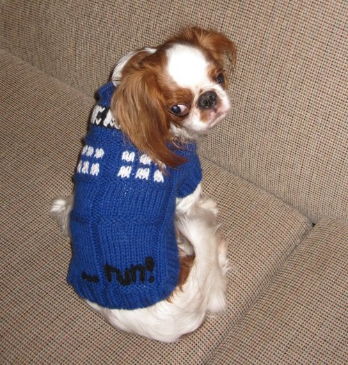 Flora-Powered TARDIS Costume (for Dogs!)