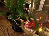 Phone-Controlled Plant Waterer with CC3200